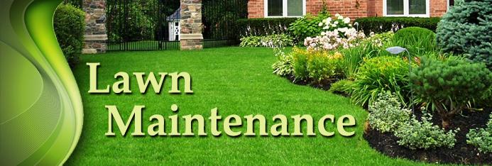 New Lawn Seeding