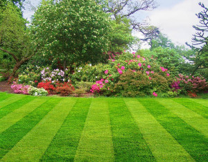 Things to do to Prepare Your Lawn for Summer