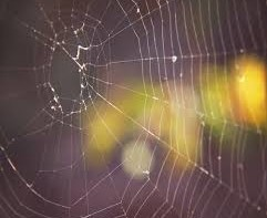 What to Do About Spiders Around Your Home
