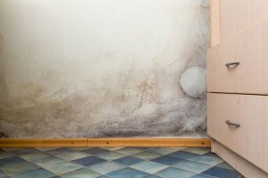 How Dangerous is the Mold in my Home?