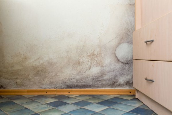 mold-kitchen-health.jpg.653x0_q80_crop-smart