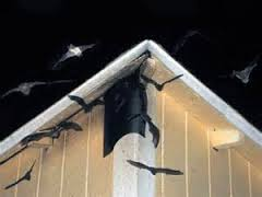 Bat Removal Tips for Homeowners