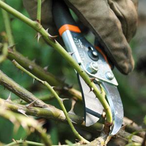 prime-pruning-300