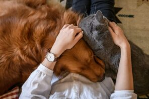 Make Your Home More Comfortable for Your Dog or Cat